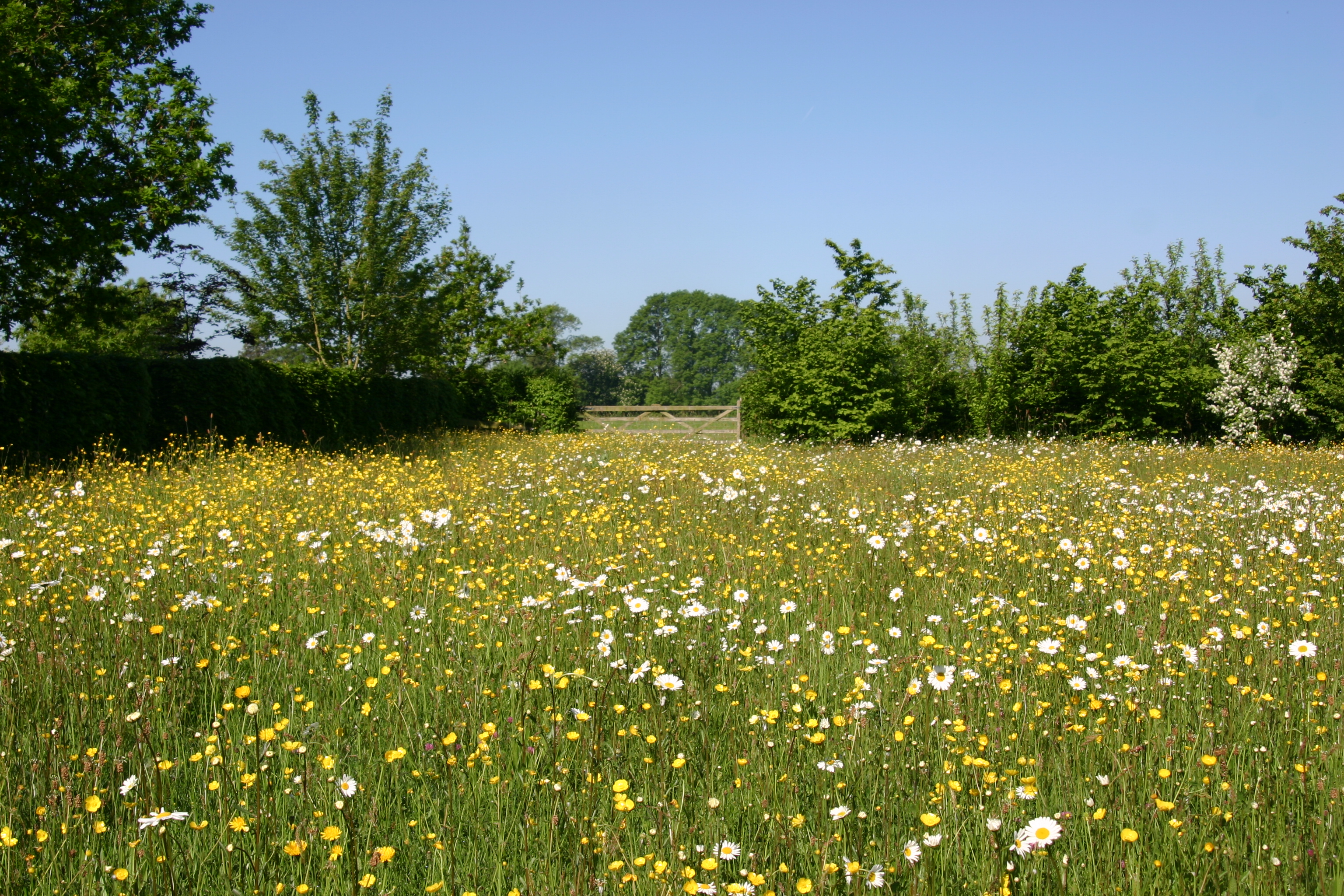 Green Books - Resources on web - Creating a Wildflower Meadow - extra photos - meadow-008